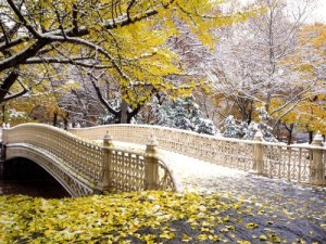 early_snowfall_central_park_new_york2