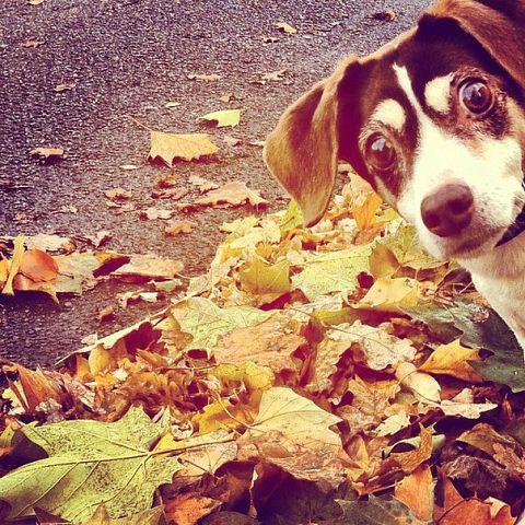 осень уже