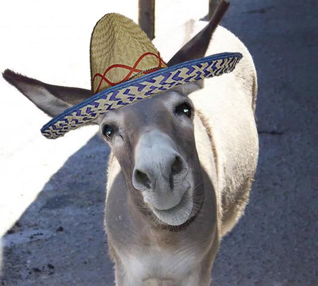 DonkeySombrero