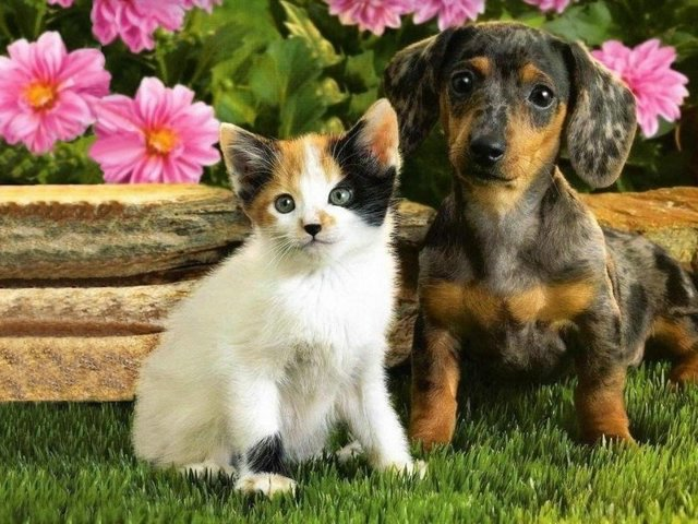 cat_and_dog09
