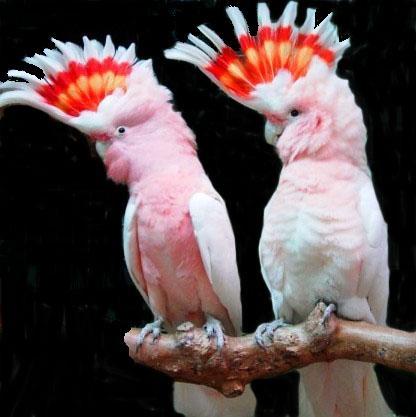 birds38