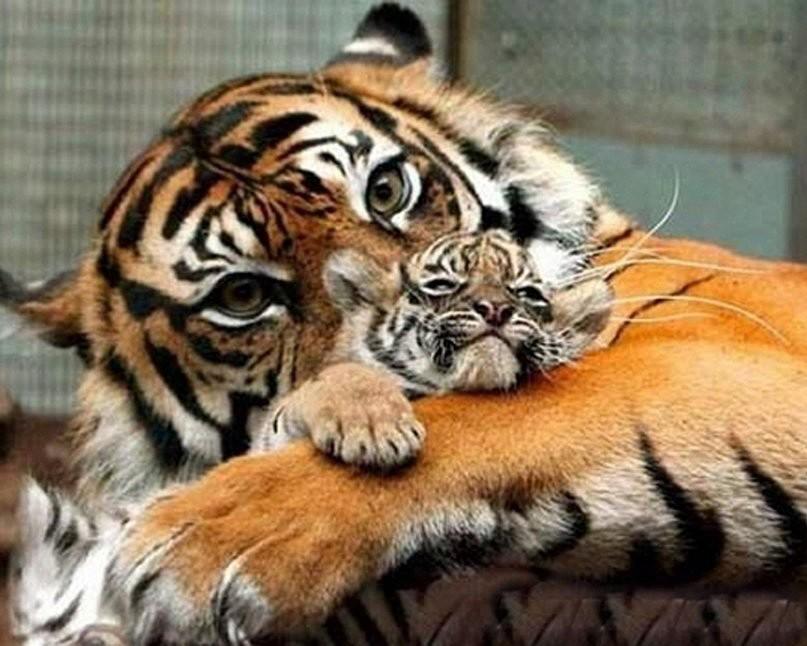 любовь мамы