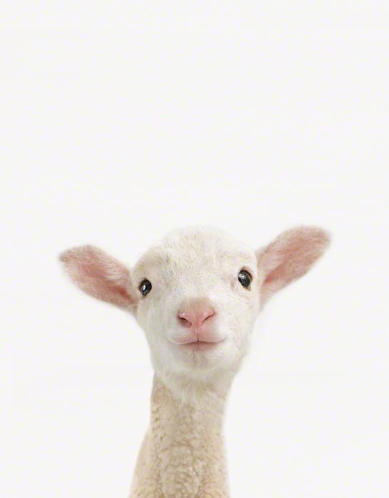 09_lamb