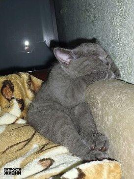 недоспал