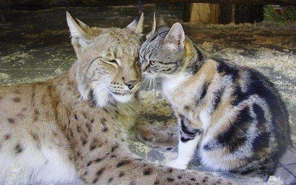 Линда и Дуся