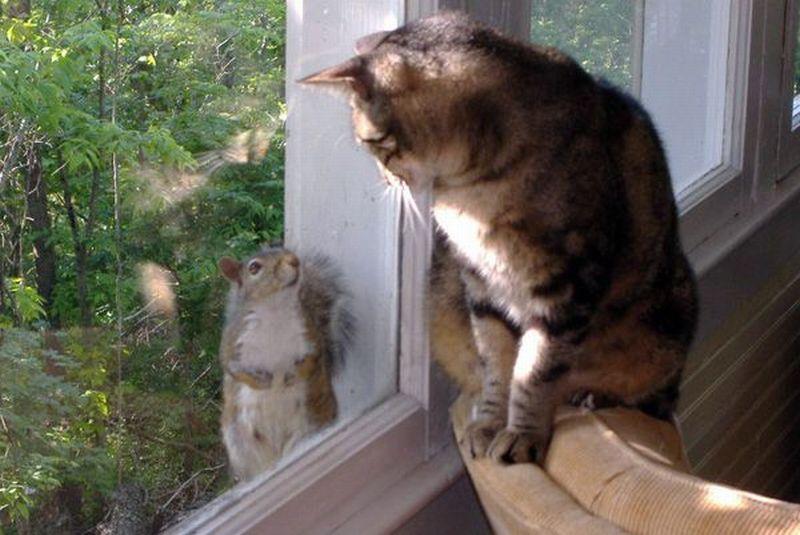 85528090_large_funny_animals_cm_20120331_00586_009
