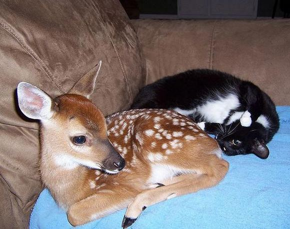 cat_and_deer_5