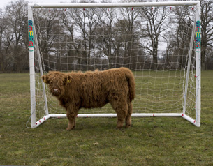 What's the beef with the goalie, Hampshire, Britain - 10 Apr 2013
