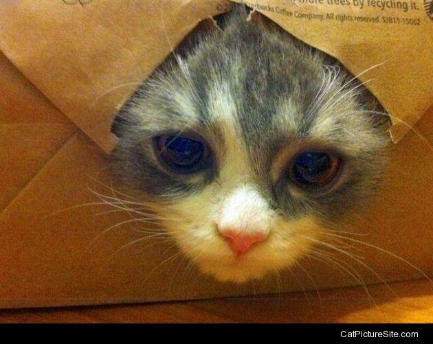 Cat_Picture_8
