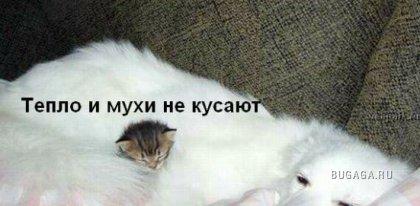 1207635117_1207410754_x_c294d291